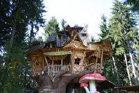Boom huis in het bos op te bouwen - opmerkelijk