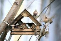 Bouw een vogel huis zelf - hoe het werkt