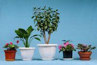Fight bloemen luizen - hoe het werkt