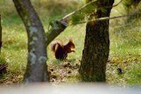 Winterslaap eekhoorns - zo help je de dieren de winter door