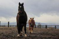 Red Dead Redemption: Koop paard - is hoe het werkt