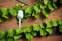Luizen op Ivy - dus rijdt u het ongedierte
