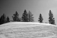 De kerstboom en de bladeren - Ontdek meer over de evolutie van de bomen