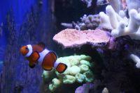 Houd zout water vissen in het aquarium - dat u moet zich bewust zijn