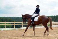 Paarden kapsels - Aanwijzingen voor een Spaanse Zopf