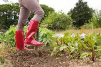 Humusrijke grond - het moet letten bij het kopen