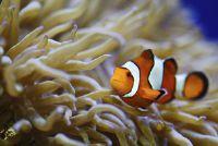 Grote algenbloei in het aquarium - Tips voor het verwijderen en preventie