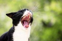 De kat bijt - Informatie en Zorg