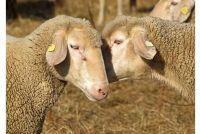 Bewerkte wol lont goed - een Strickanleitung
