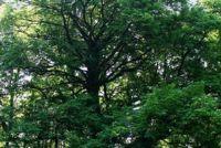 De stijgijzers een boom - dus het zal werken