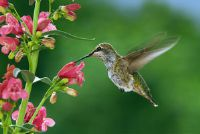 Vlucht soorten vogels - een overzicht