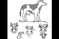 Gemakkelijk om het verschil tussen koe en rundvlees verklaren