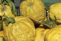 Amalfi citroenen - een kleine Ongekookt