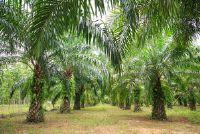 Is Palm vette ongezonde?