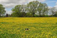 Het vinden van goede hond namen die goed voor de hond om te begrijpen zijn - hoe het werkt
