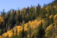 Koop bosgrond - het moet je betalen