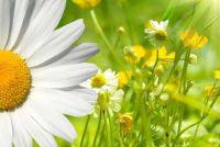 Maak lente tafeldecoratie zelf - hoe het werkt