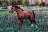 Lengte van een paard - Notities