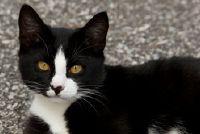 Zwarte en witte kittens - zodat u de juiste naam te vinden