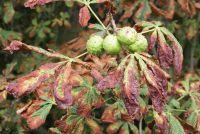 Voorkom blad ziekten - zodat u uw planten goed te onderhouden