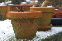 Overwinteren Kamer Hibiscus - zodat uw plant bloeit weer in volledige afleveringen