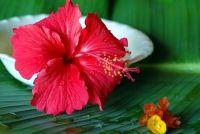 Hawaii Kleding - jurken met bloemenprints zelf maken