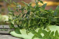 Mint planten op het balkon - Tips