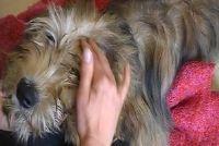 Hond massage - dus het is een traktatie voor uw huisdier