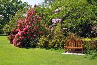 Sierbomen voor de tuin - ontwerp en onderhoud tips