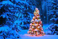 Hoe lang duurt de kerstboom?