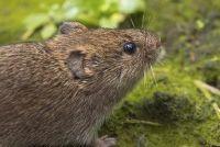 Muizen in de tuin - wat te doen?
