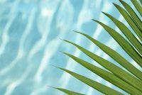 Palm zaad planten - hoe het werkt