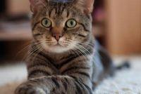 Vecht vlooien succes bij katten - de Note