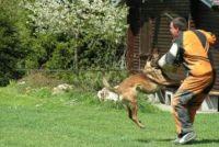 De hond springt op mensen - dus je wennen aan het van hem