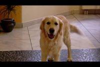 Zijn hond vlooien op de mens overdraagbare?  - Kennis over de hond vlooien