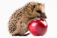 Egels voeden - het maken van je hongerige dieren iets goed doen