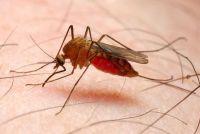 Muggen in de slaapkamer - dus je zal ontdoen van het ongedierte