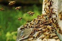 De fabel van de bijen - werk en analyse
