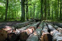 Breng voor het lezen certificaat voor hout
