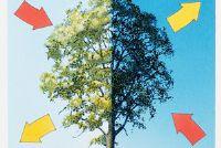 Relatie tussen fotosynthese en celademhaling - eenvoudig uitgelegd