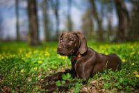 Verwijder teken bij honden - zodat je het goed te krijgen