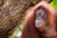 Sleutelen een aap masker à la Peter Fox