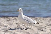Ideeën voor een fotoshoot op het strand