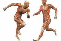 Muscle namen - de 9 belangrijkste spieren van de mens