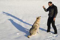 Wolf Vergelijkbare rassen - Nuttig