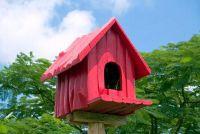 Een vogel huis bouwen met kinderen