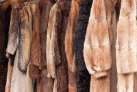 Verkoop fur - dat u moet zich bewust zijn