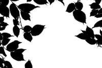 Muurtattoo's - produceren van een boom met een film zelf