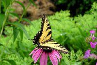 Insecten in de tuin - met deze planten slepen vlinders