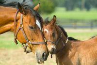 Trust oefeningen met een paard - ze zijn gemaakt